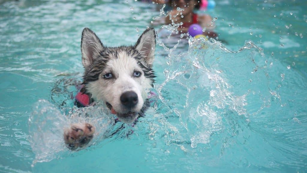 N'oubliez la pompe de filtration pour votre piscine !